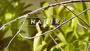 Natur a Ni