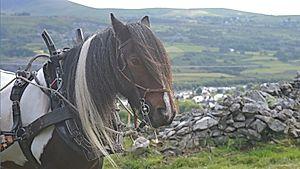 Ceffylau Cymru